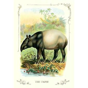 The Tapir 1900 Poster Print by Unknown