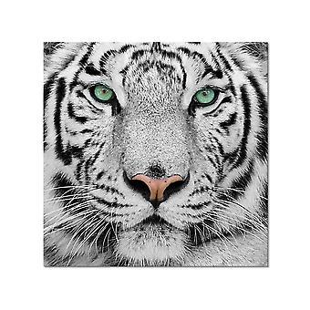 Het hoofd van de sumatraanse tijger van de lijst