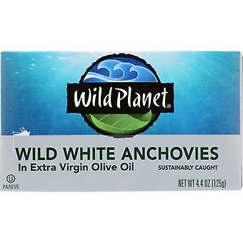Wild Planet Anchovy White W Evoo, Case of 12 X 4.4 Oz