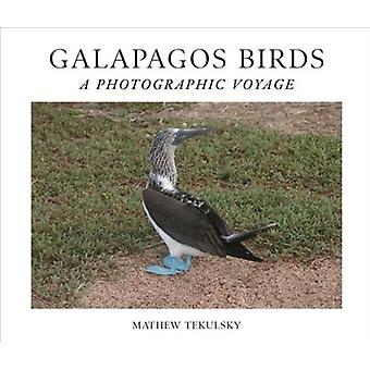 Galapagos Birds  A Photographic Voyage by Mathew Tekulsky