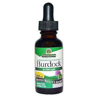 Nature's Antwoord, Kliswortelextract, Alcoholvrij, 1.350 mg, 1 fl oz (30 ml)