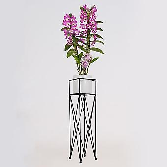 BOTANICLY Dendrobium nobile Lilac - Bambu Orkidea