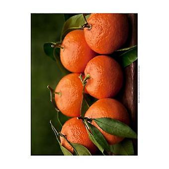 Satsuma Tangerines II Poster Print by Rachel Perry (19 x 13)
