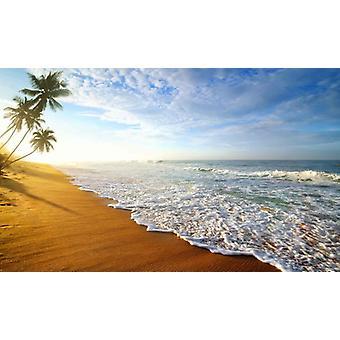 Fondo de pantalla Mural Palm Tree Beach Sri Lanka