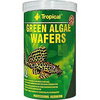 Tropical Spirulina Cookies (Fish , Food , Warm Water)
