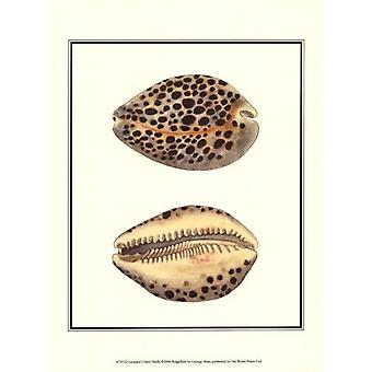 Леопард Cowry снарядов плакат печати Джордж шоу (10 x 13)