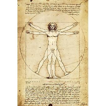 Da Vinci Vitruvian Man Poster Print Poster Poster Print