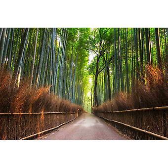 Fond d'écran Mural Bamboo Grove of Kyoto