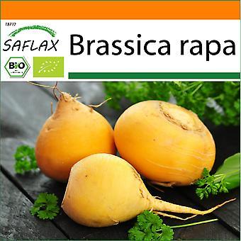 Saflax - Garden in the Bag - 500 seeds - Organic - Turnip - Goldana - BIO - Chou navet - Goldana - BIO - Cavolo rapa - Goldana - Ecológico - Colirrábano - Goldana - BIO - Kohlrabi - Goldana
