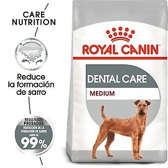 Royal Canin Medium Dental Care (Dogs , Dog Food , Dry Food)