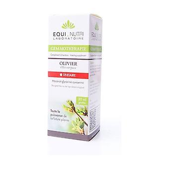 Olivier BIO - Olea europea 30 ml