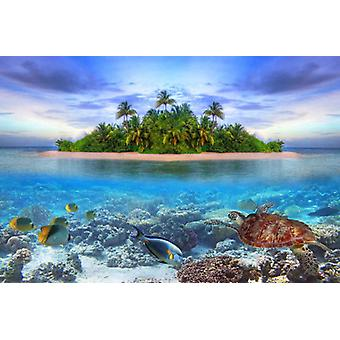 Wallpaper Mural Marine Life Maldivas