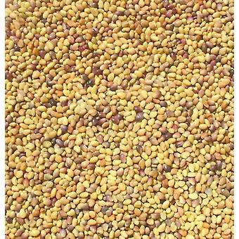 Organic Red Clover Seeds -( 11lb )