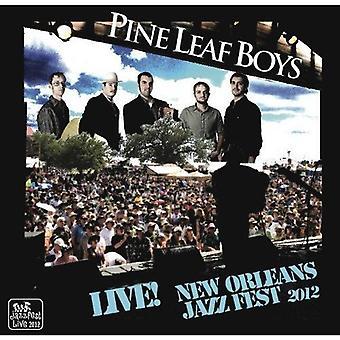 Pine Leaf Boys - Live at Jazzfest 2012 [CD] USA import