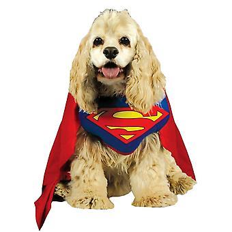 زي الكلب سوبرمان