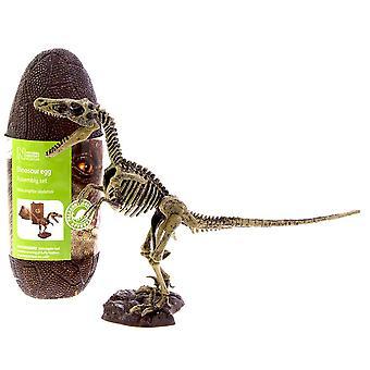 Velociraptor Model Skeleton 14 piece Construction Kit in a Dinosaur Egg