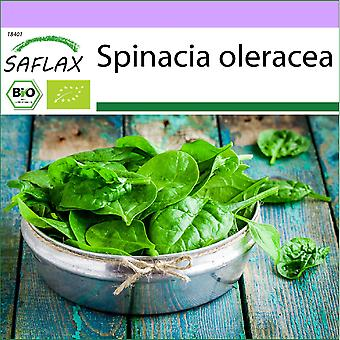 Saflax - 250 frø - Organisk - Spinat - Giant Winter - BIO - Epinard d'hiver - BIO - Spinaci - Gigante d'inverno - Ecológico - Espinaca - Gigante de Invierno - BIO - Spinat - Winterriese