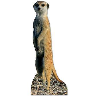 Meerkat Lifesize Karton Ausschnitt / AC