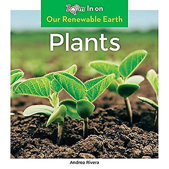 Plantes (notre terre renouvelable)