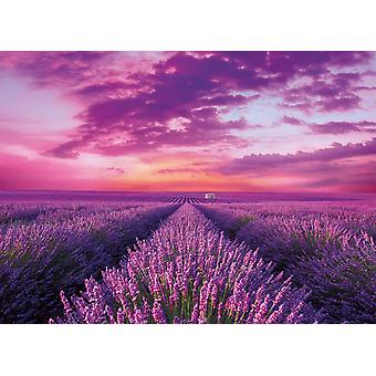 Clementoni Lavendel fält högkvalitativt pussel (1000 stycken)