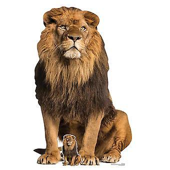 Lion Big Cat Lifesize Cardboard Cutout / Standee / Standup / Standee