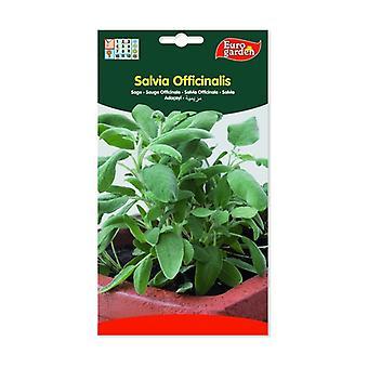 Salvia Officinalis Frø 2 g