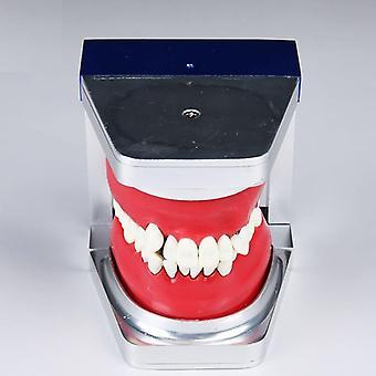 Zahnhopädisches Praxiszahnmodell