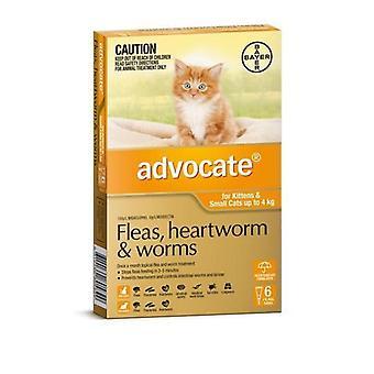 Befürworten Sie 6 Pack kleine Katzen unter 4kg