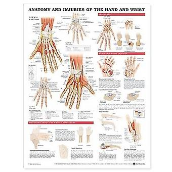 Anatomy and Injuries of the Hand and Wrist Anatomical Chart by Prepared for publication by Anatomical Chart Company