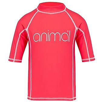Animal Molli Short Sleeve Rash Vest in Petunia Pink