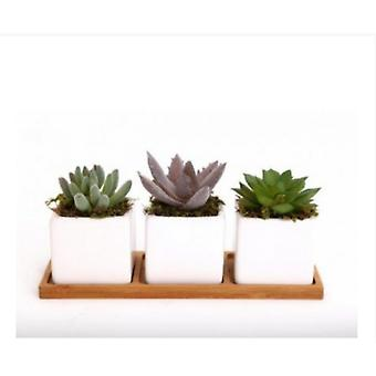Potted Succulents on Tray (Set of 3)
