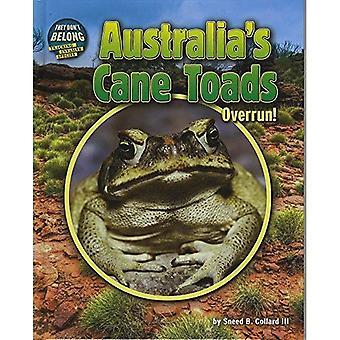 Australiës Cane padden: Bufferoverloop! (Zij niet behoren)