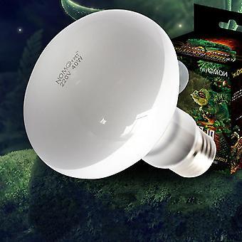 Matelijalamppu, polttimokilpikonna paistattelee Uv-hehkulamppuja, lämmityslamppu, sammakkoeläimet