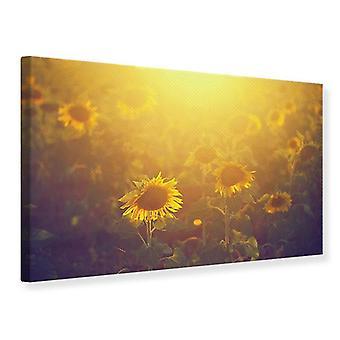 Leinwand drucken Sonnenblume In goldenes Licht
