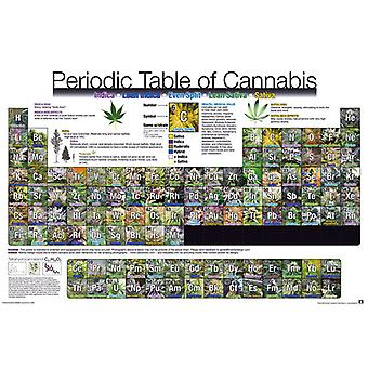 Periodic Table Of Cannabis Maxi Poster 61x91.5cm