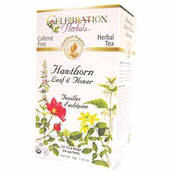 Celebration Herbals Organic Hawthorn Leaf & Flower Tea, 24 Bags