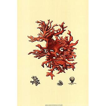 Red Coral (N) III Poster Print by Vision studio (13 x 19)
