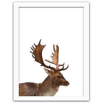 Picture In White Frame, Deer