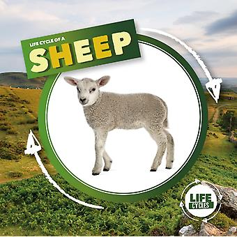 Life Cycle of a Sheep by Kirsty Holmes
