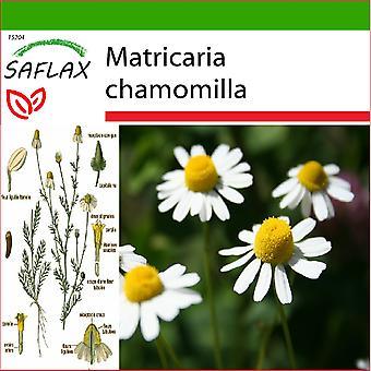 Saflax - 300 semillas - con suelo - Matricaria - manzanilla sauvage - Camomilla - Manzanilla común - Echte Kamille