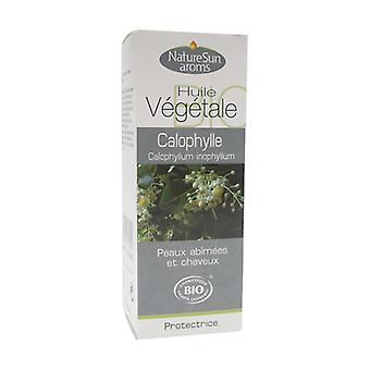 Calophylle Bio vegetable oil 50 ml of oil