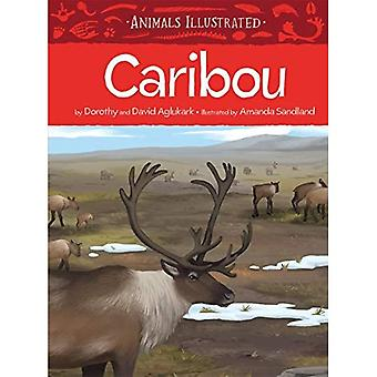 Animals Illustrated: Caribou� (Animals Illustrated)