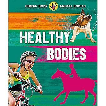 Människokroppen, djurs kroppar: Friska kroppar (människokroppen, animaliska organ)