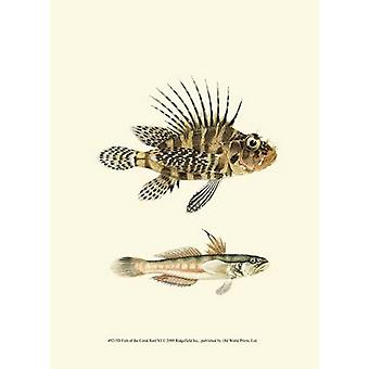 Fish of the Coral Reef VI Poster Print (10 x 13)