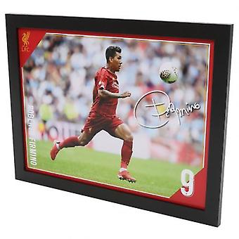 Liverpool Picture Firmino 16 x 12