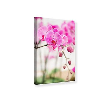 Impresión de lona a rayas flores orquídeas en color rosa