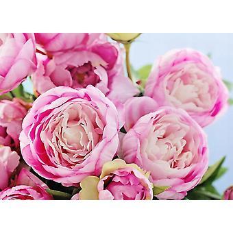 Fondo de pantalla mural rosa Peonía flores
