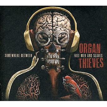Organ Thieves - Somewhere Between Free Men & Slaves [CD] USA import