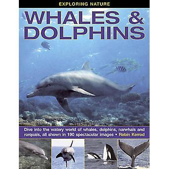 Tutkia luonnon - valaat & delfiinit - Sukellus vetistä WH