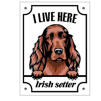 Plåtskylt Irish Setter Kikande hund skylt English